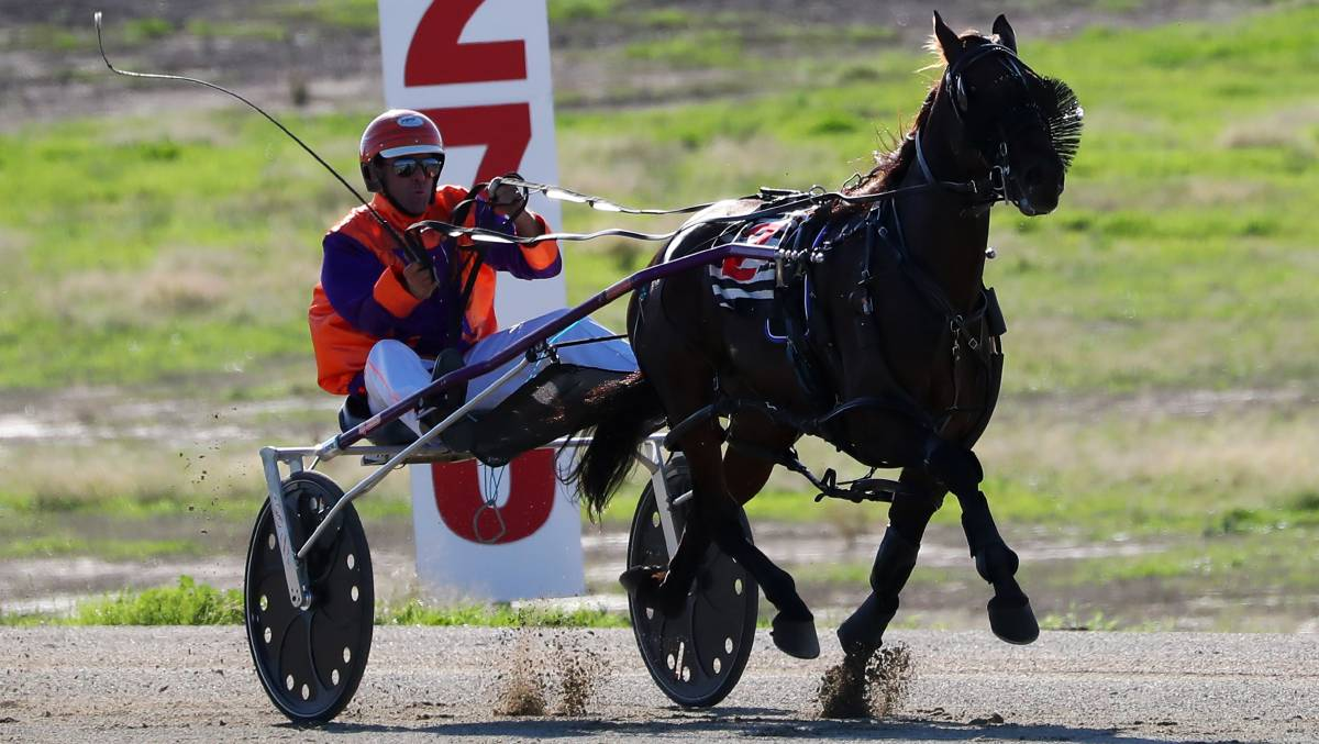 KICKING CLEAR: Steve Harris urges Roll Play to the line as he brought up his first race win at Riverina Paceway on Tuesday. Picture: Emma Hillier