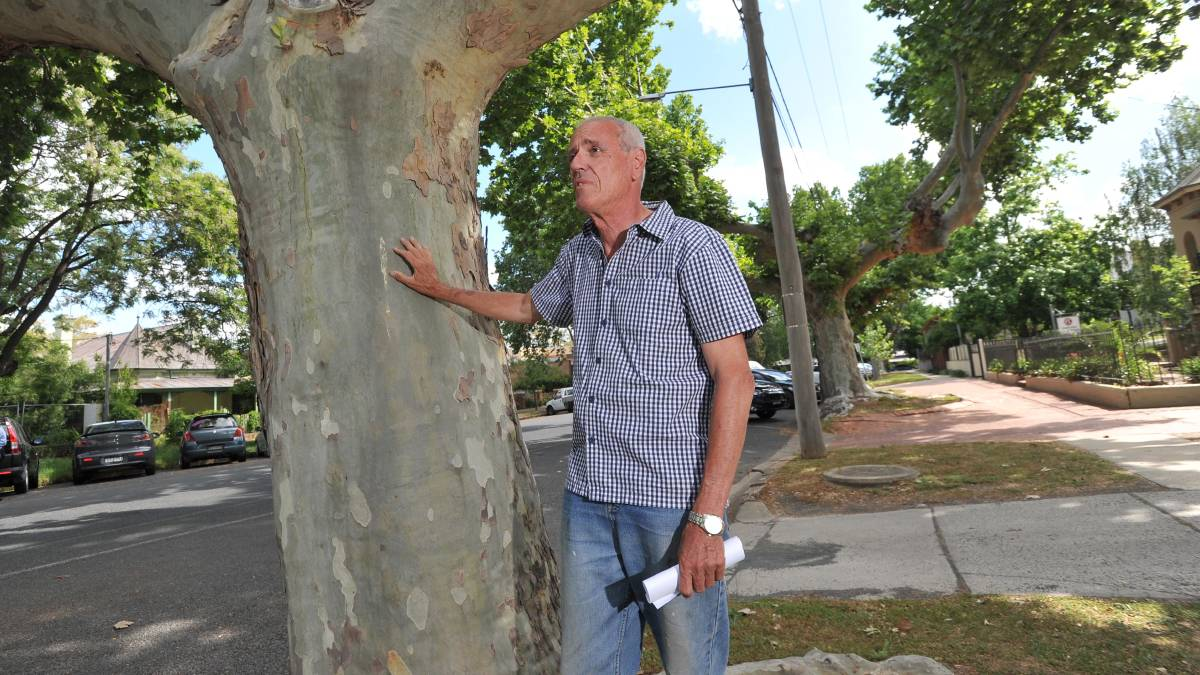 SAVE THE TREES: Kerry Geale is angry about the removal of plane trees in Wagga's Johnston Street. Council maintains they have reached the end of their useful life, but locals fear more plane trees could be removed, which will cost the city its charm. Picture: Laura Hardwick