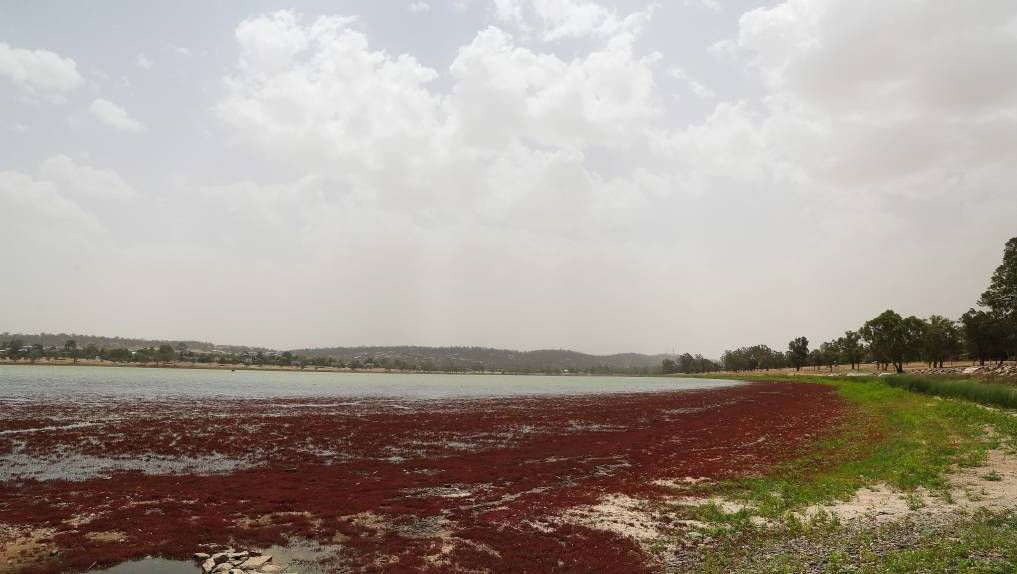 IN LIMBO: A solution for Lake Albert's water levels still has no answer. Picture: Emma Hillier