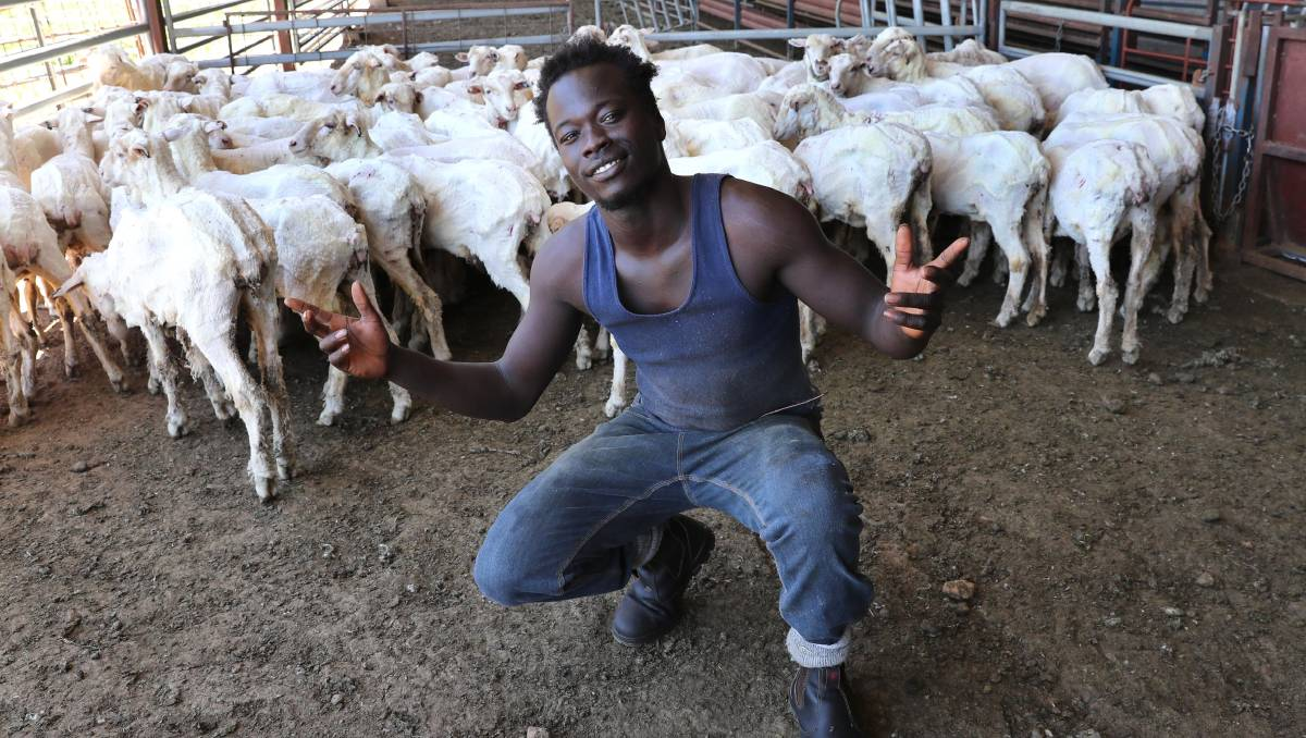 Abe's shearing to a brand new beat | Video, Photos