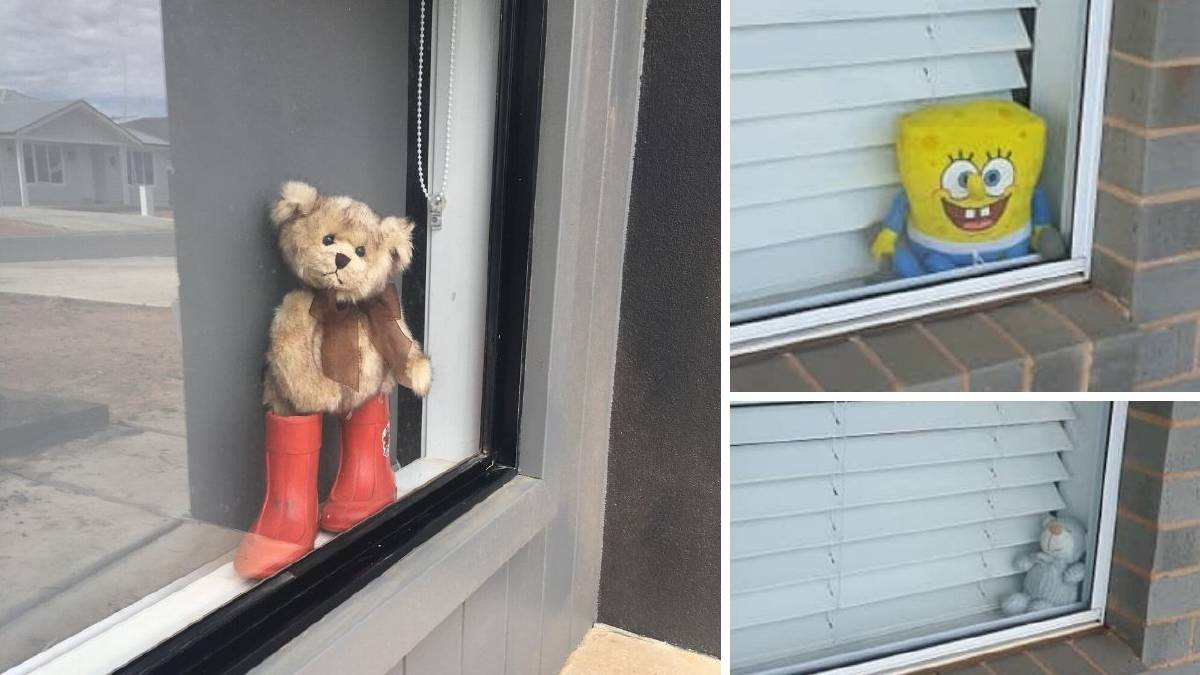 Toy bears popping up in Wagga windows: Here's why